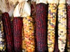 Corncobs, maize for bioethanol production
